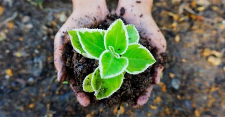 土壤和沉积物检测